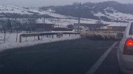 Truma de oi pe drum